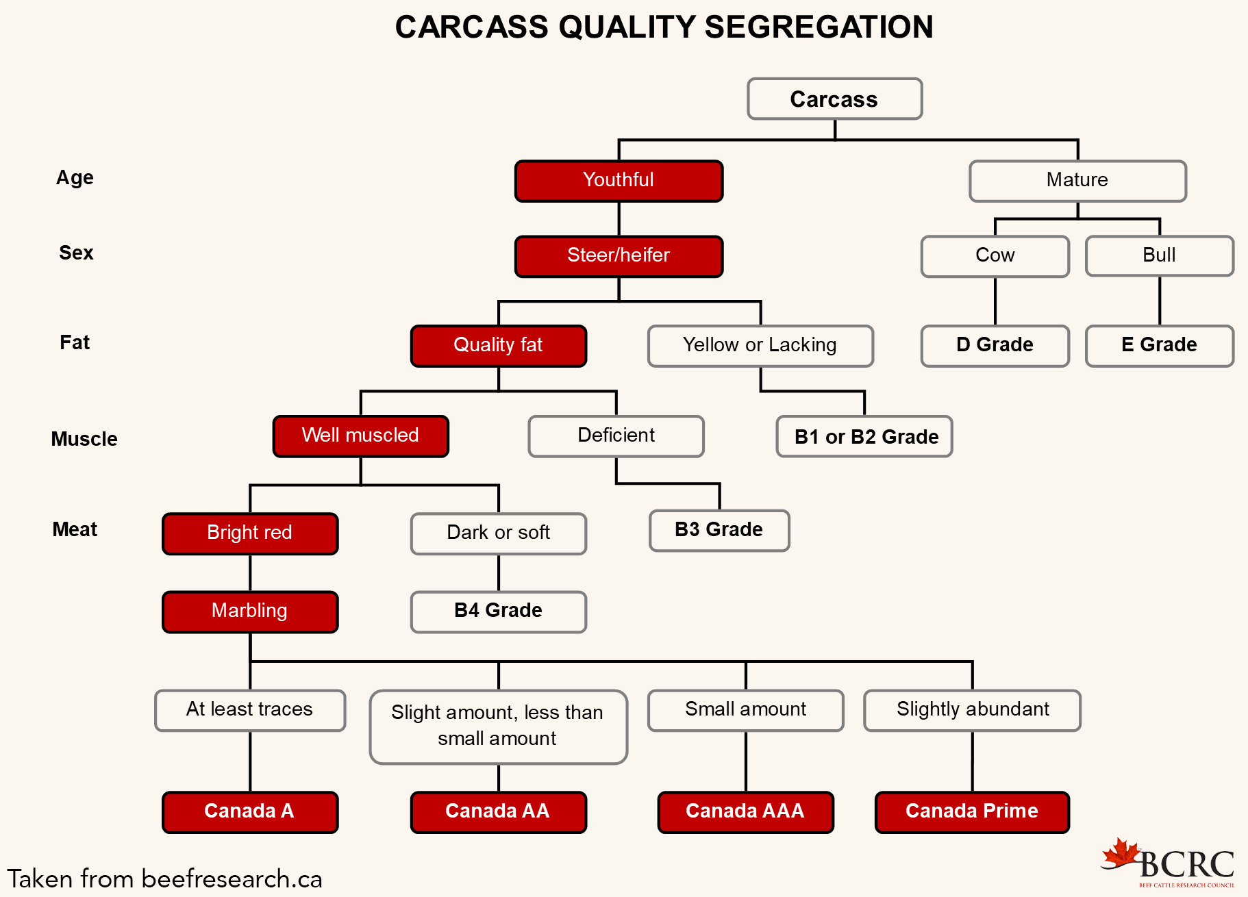 Beef Quality Segregation chart from Summit Meats